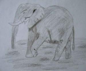 sm-elephant-drawing