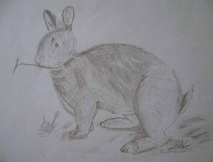 sm-rabbit-drawing